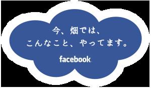 今、畑では、こんなことやってます。facebookをごらんください。